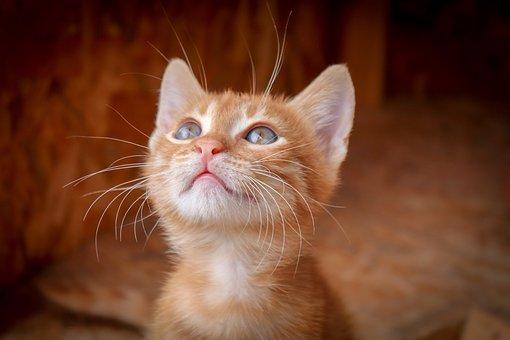 Cat, Animal, Domestic Cat, Close Up, Kitten, Pet, View