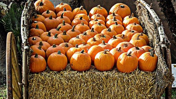 Pumpkin, Fruit, Food, Diet, Eat, Healthy, Pumpkins