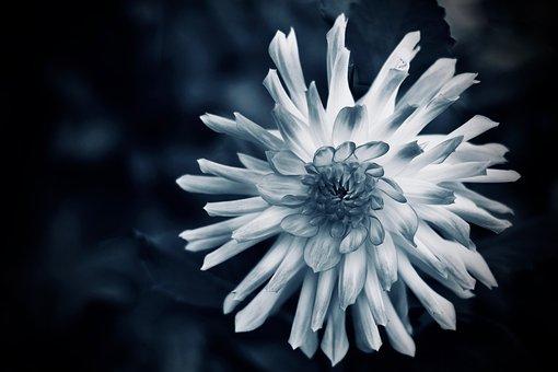 Flower, Bloom, Blossom, Annual, Posy, Head, Growth