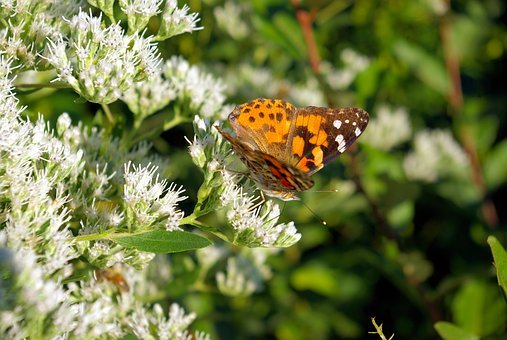 Flowers And Butterfly, Plant, Flowering