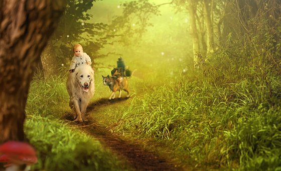 Forest, Baby, Dog, Cat, Fantasy, Ride, More, Travel