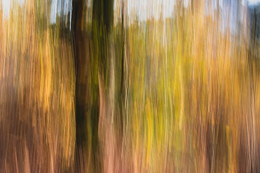 Forest, Autumn, Abstraction, Landscape, Collapse