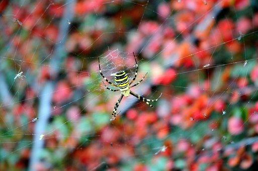 Web, Animals, Eight, Autumn, Yellow, Spider, Garden