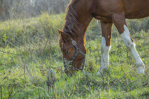 Horse, Foal, Autumn, Grass, Dry