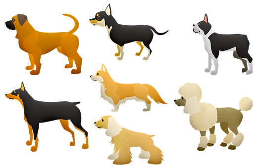 Dogs, Poodle, Large Dogs, Terrier, Pet, Animal, Play