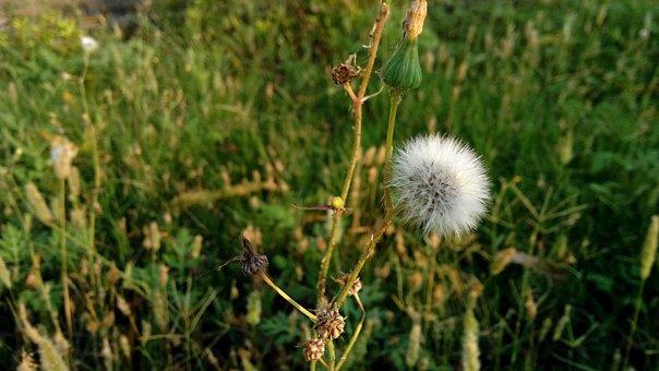 Nature, Leaf, Flower