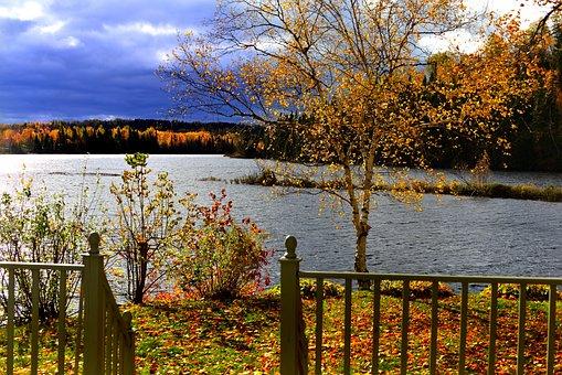 Landscape, Fall, Nature, Tree, Birch, Lake, Leaves
