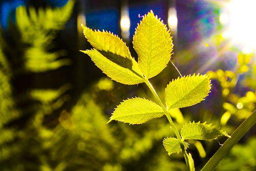 Nature, Leaves, Green, Plant, Spring, Bright