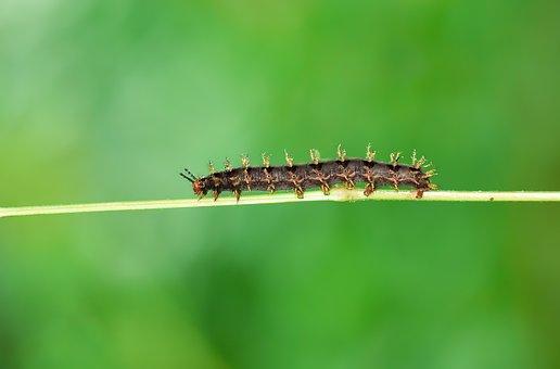 Caterpillar, Macro, Wallpaper, Wild, Nature, Böcek