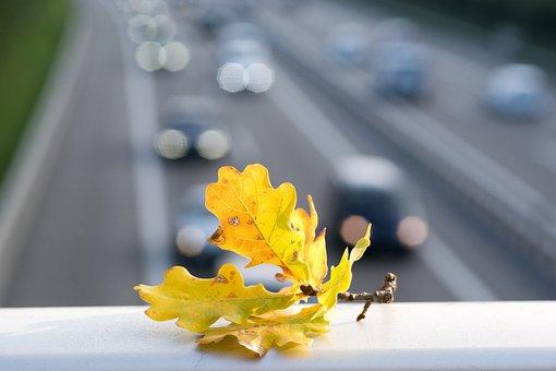 Highway, Autos, Autumn, Autumn Leaf, Vehicles, Pkw