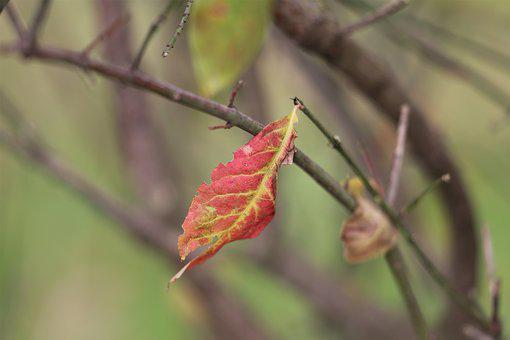 Red Leaf, Lonely, Branches, Foliage, Autumn, Nature