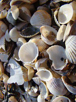 Mussels, Beach, Sand, Coast, Sea, Water, Maritime