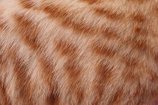 Fur, Hair, Cat, Mackerel, Red, Fluffy, Screensavers