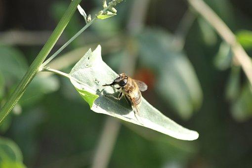 Fly, Sheet, Little, Sitting, Summer, Macrophoto