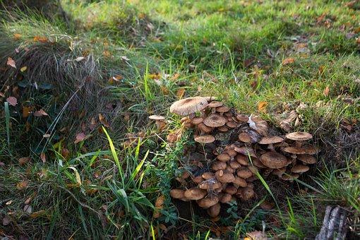 Forest, Nature, Mushrooms, Mushrooming, Storm Damage