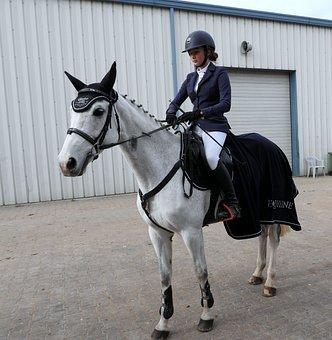 Horse, The Horse, Nature, Mammal, Holding, On Horseback
