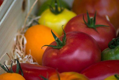 Tomatoes, Vegetables, Harvest, Garden