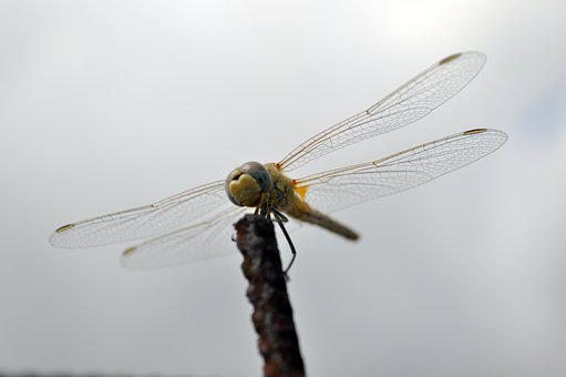Dragonfly, Insect, Flight, Waiting, Nature