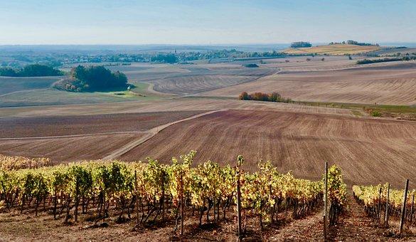 Vineyard, Vines, Winegrowing, Wine, Autumn, Rebstock