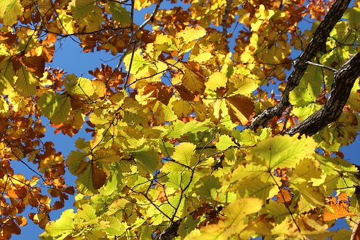 Leaves, Yellow Leaves, Autumn, Nature, Season, Mood