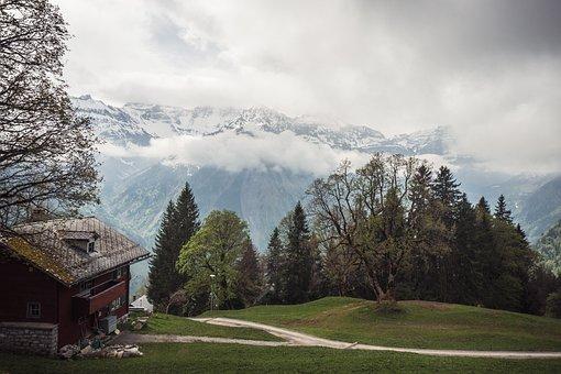 Switzerland, Mountains, Green, Grass, Trees, Alpine