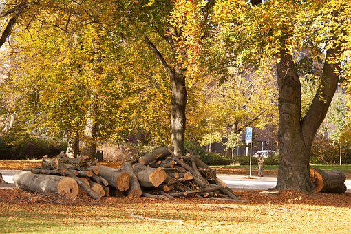 Forest, Park, Trees, Felling, Tree Trunks, Autumn