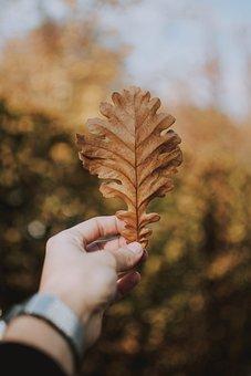 Leaf, Hand, Keep, Brown, Autumn, Nature