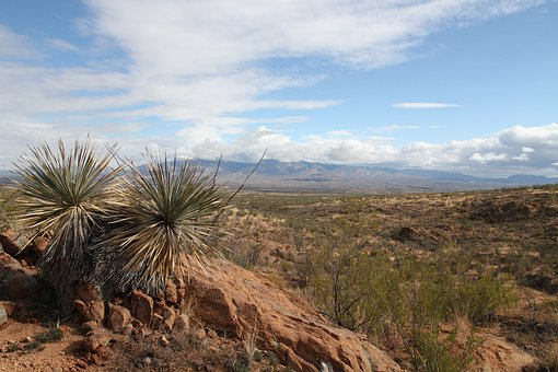 Landscape, Arizona, Big Sky, Cacti, Cactus, Southwest