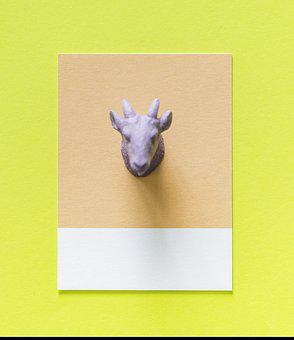 Abstract, Animal, Background, Card, Colorful, Concept