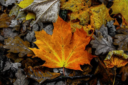 Leaves, Leaf, Autumn, Color, Colorful, Contrast, Gloomy
