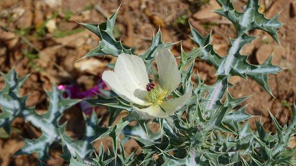 Namibia, Plant, Desert, Nature, Green, Prickly, Botany