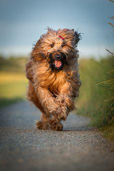 Dog, Race, Animal, Action, Hundesport, Pet, Movement