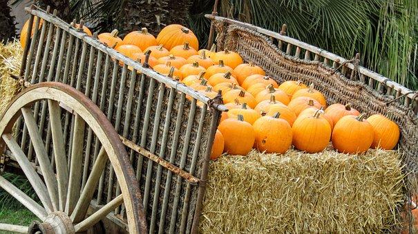 Cart, Pumpkins, Fruit, Colorful, Autumn, Harvest