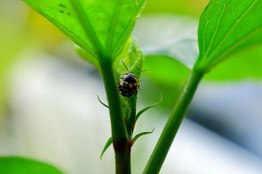Insect, Flora, Garden, Ladybug