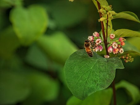 Nature, Osa, Insect, Summer, Flower, Garden, Plant