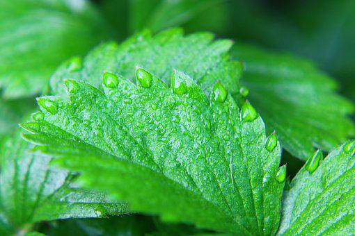 Leaf, Green, Green Leaf, Nature, Garden, Water Drop