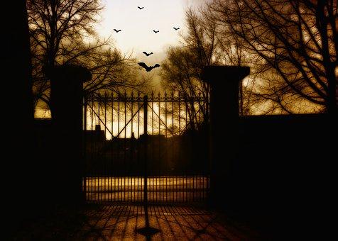 Bats, Dark, Moon Lights, Halloween, Weird, Darkness