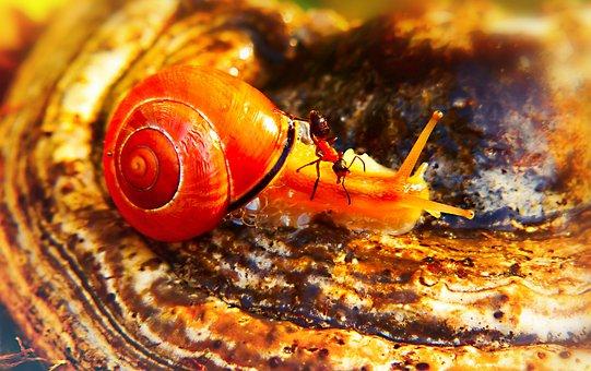 Wstężyk Huntsman, Ant Red, Insect, Mushroom, Hub