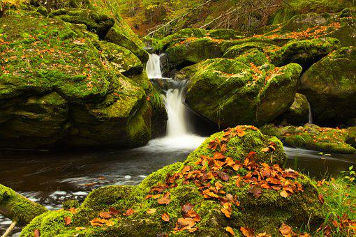 Creek, Autumn, Nature, Water, River, Landscape
