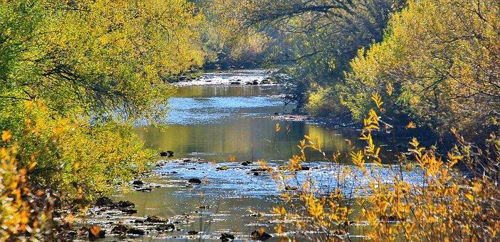Autumn, River, Danube, Water, Forest, Landscape, Nature