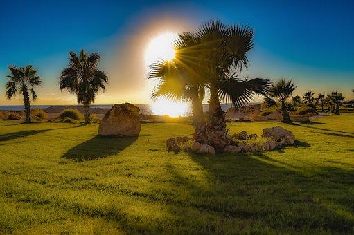 Landscaping, Palm Trees, Rocks, Garden, Landscape