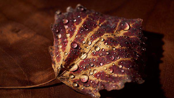 Autumn, Leaves, Red, Leaf, Nature, Fall Foliage