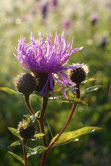 Flower, Macro, Lilac, Purple, Rosa, Grass, Nature