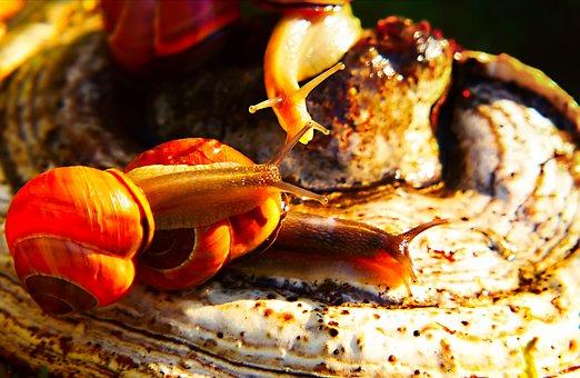 Wstężyki Gajowe, Molluscs, Mushroom, Hub, Autumn