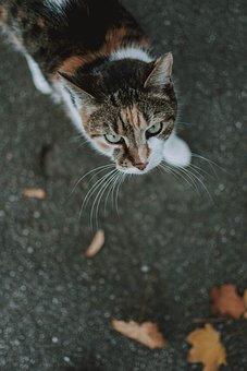 Cat, Animal, Nature, Pet, Animal World, View, Eyes