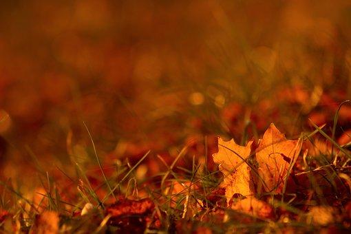 Sheet, Grass, Nature, Autumn, Season, Color, Mood