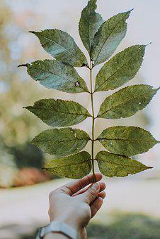 Woman, Hand, Leaf, Keep, Green, Nature, Autumn