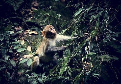 Animal, Monkey, Woods, Nature, Furry, Creature