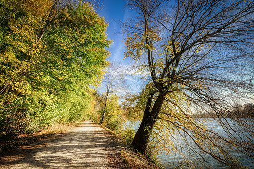 Forest, Away, Nature, Trees, Trail, Landscape, Light