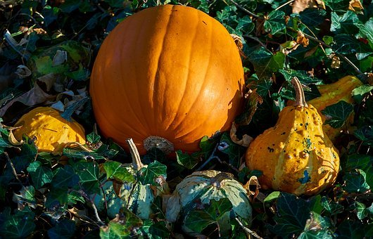 Pumpkins, Autumn, Decoration, Decorative Squashes